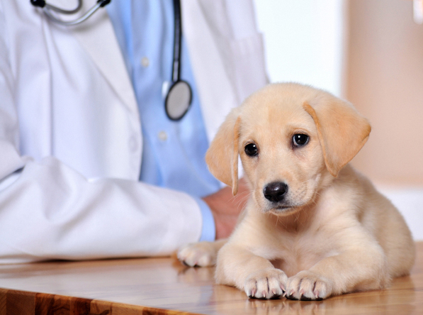 Portland, OR. Pet Clinic Insurance